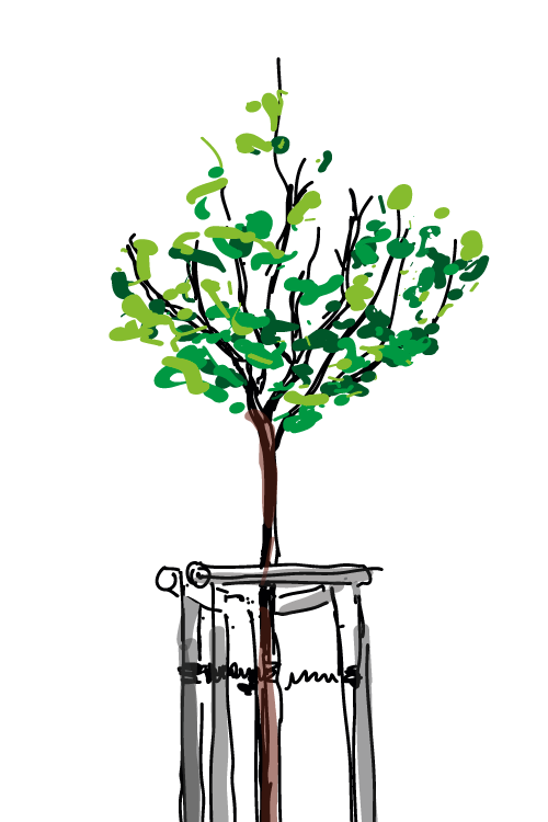 Pflanzt Bäume!
